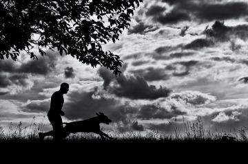 running-dog-2185090_1280